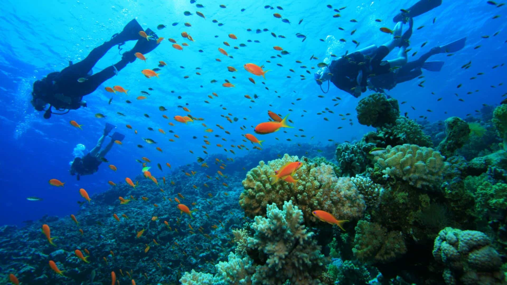 Plongée Sous Marine Hôtel Sampiero Corso Propriano Bord